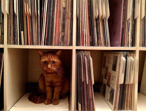 Purfect record dividers by Filotrax