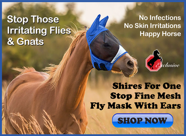 The Best Horse Supplies and Horse Equipment from One Stop Equine Shop