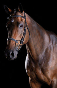 Collegiate Comfitec Fancy Stitch Bridle, Full English Bridles, Collegiate, One Stop Equine Shop - One Stop Equine Shop