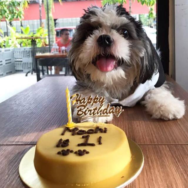 healthy dog birthday cake singapore