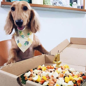 [GOOD DEEDS - TO BE DONATED TO SPCA] Pizza