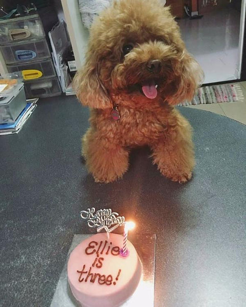 cute vegetarian dog cake singapore