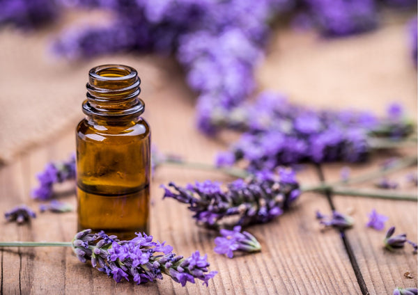 7  Benefits Of Lavender Essential Oil
