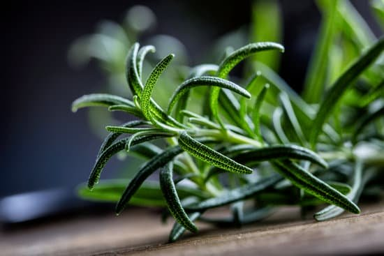 Ingredient Of The Week: Rosemary Essential Oil