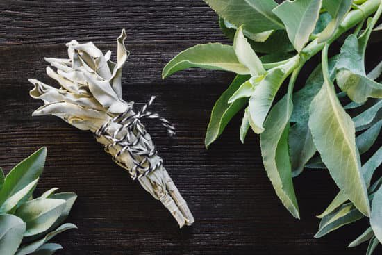 Ingredient Of The Week: Sage Essential Oil