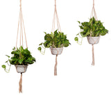 Vintage Plant Hangers x4 - Home Insight