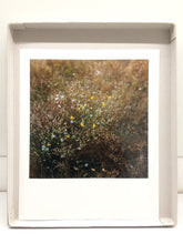 Load image into Gallery viewer, Wiese I - Limited Print