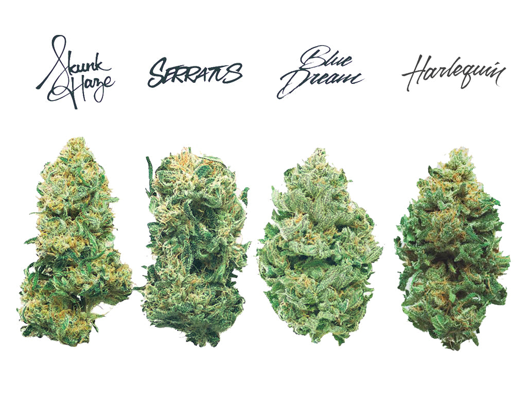Tantalus Labs exclusive for Kiaro: Blue Dream, Harlequin, Skunk Haze, Serratus