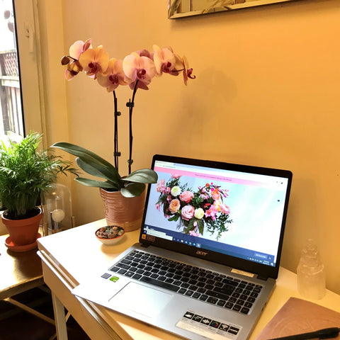 pink orchid and fern plants on desk with computer