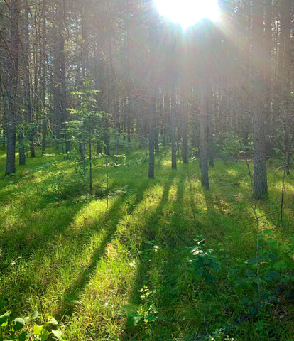 grassy clearing in forest bathed in sunlight