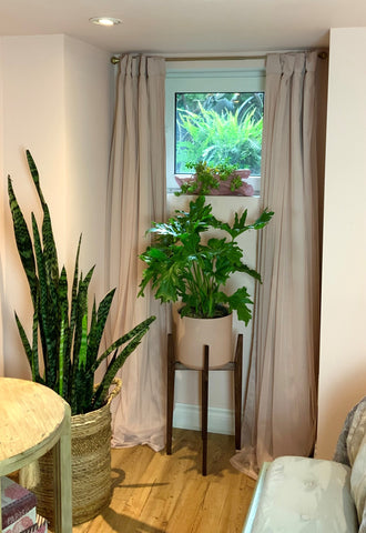 plant stand in window with philodendron selloum and sansevieria