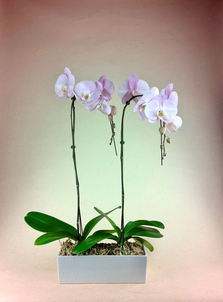 """Double The Love"" Orchid Planter"