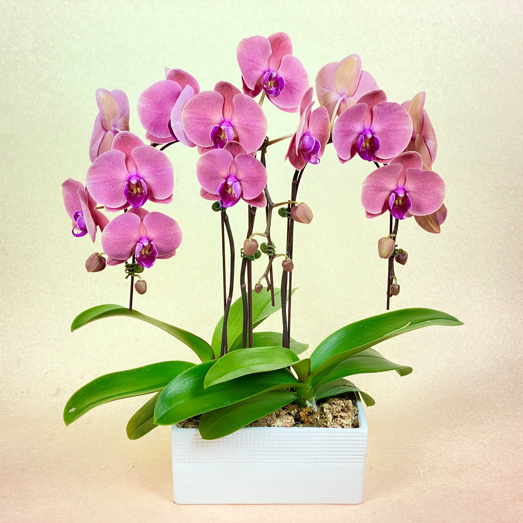 Orchid Planter - Salmon