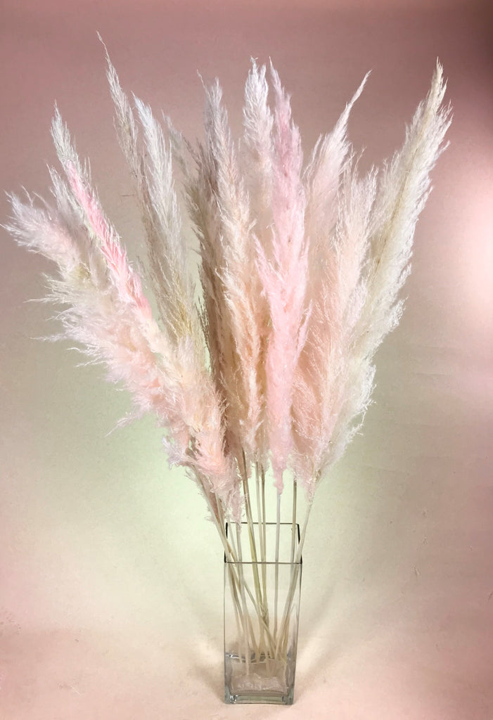 Tall Pink Pampas Grass