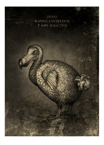 Dodo - Fine art print, limited edition