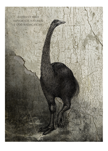 Elephant bird – Fine art print, limited edition