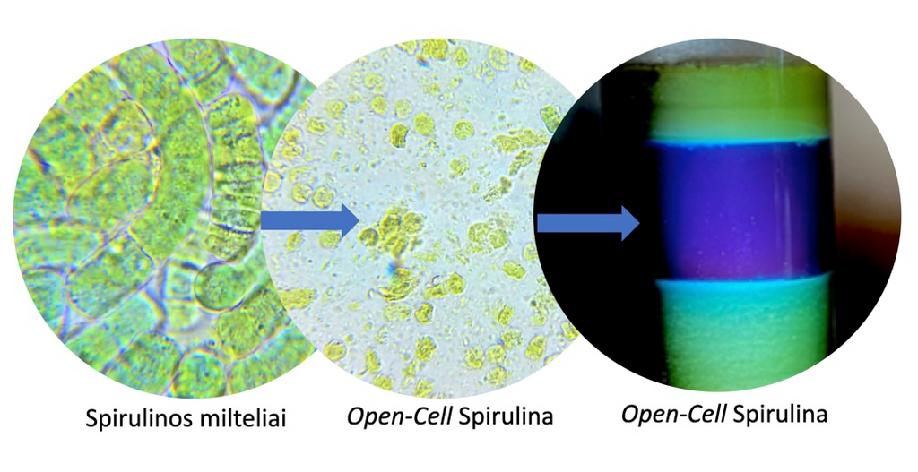 OPEN CELL SPIRULINA