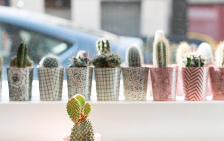 le cactus club boutique paris plantes pots