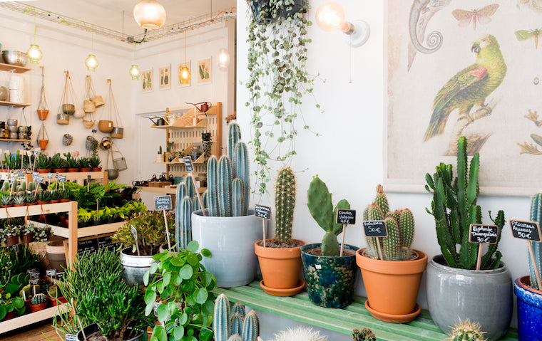 le cactus club boutique paris plantes pots ateliers