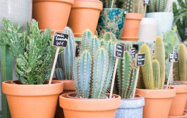 le cactus club boutique paris succulentes plantes grasses