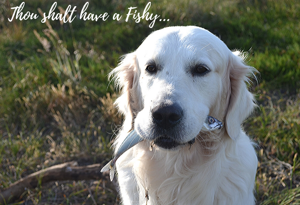 Is fish beneficial for a balanced doggy diet?