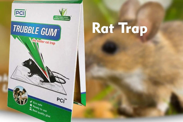 PCI Cardboard Troublegum Small Size Mouse Trap-1pc - H00370 - ALL MY WISH