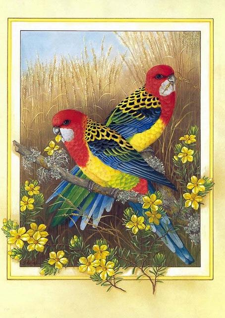 Couple de Perroquets - Kit Broderie Diamant - Artiste du Diamant - Diamond Painting