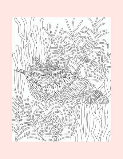 Coloring Page 9 Conch Shell - Self Care Pursuit