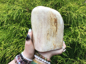 "Petrified Wood Large 4 lb. ~ Stunning 7"" Tall Collector's Display Piece ~ Mined In The Philippines Millions Of Years Old ~ Fast Shipping"