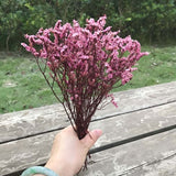 15-25CM Crystal Grass Natural Fresh Dried Preserved Forget me Flowers,Real Forever Lover Grass Branch For Home Decor