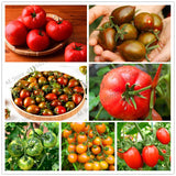 300 Seasons Fruit Vegetable Seeds easy to grow