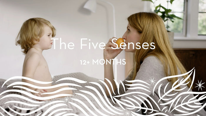 12+ | The Five Senses