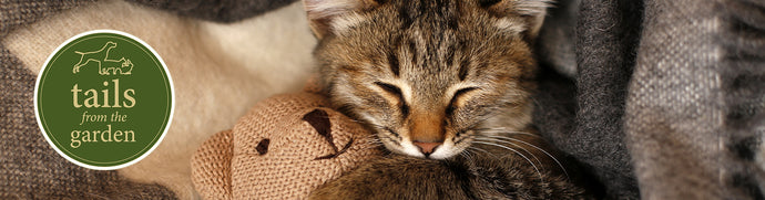 5 Steps to a Happy and Healthy Kitten