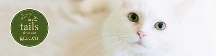 5 Things You Didn't Know About Your Cat