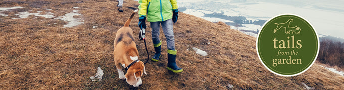 Top tips for winter dog walking