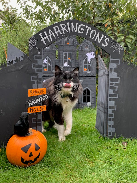How to create a haunted cat house