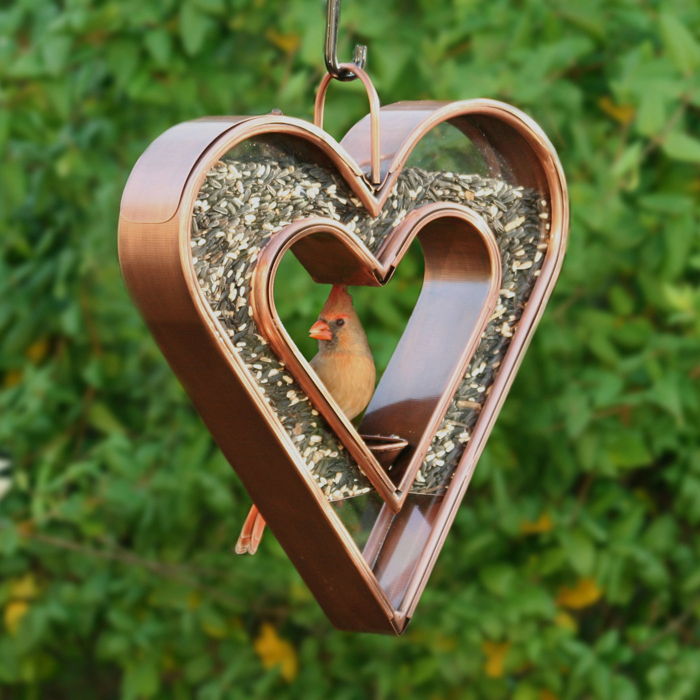 Steel Heart Shaped Bird Feeder with a Copper Finish in a Garden with a Cardinal Feeding