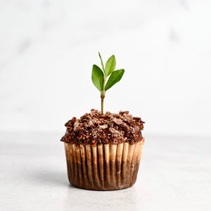 Earth Day Seedling Cupcakes