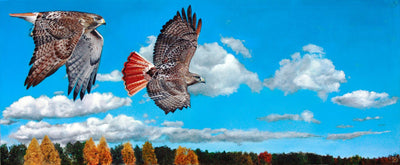 Buy original Toronto Canadian art oil painting for sale Dan Murphy Red Hawk Sky