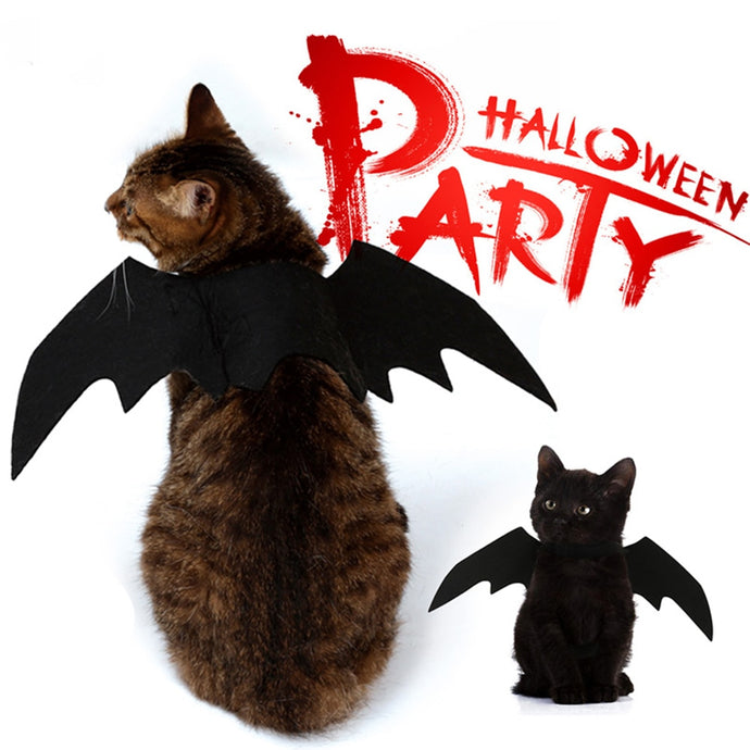 Best Halloween Costumes for your Dog and Cat.