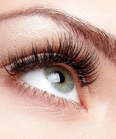 Human Hair Lashes & Eyelash Extensions – HairArt Int'l Inc
