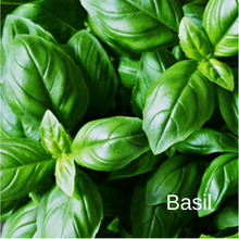 Load image into Gallery viewer, Basil