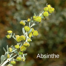 Load image into Gallery viewer, Absinthe