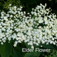 Load image into Gallery viewer, Elderflower