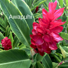 Load image into Gallery viewer, Awapuhi