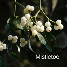 Load image into Gallery viewer, Mistletoe