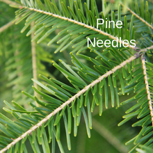 Load image into Gallery viewer, Pine Needles
