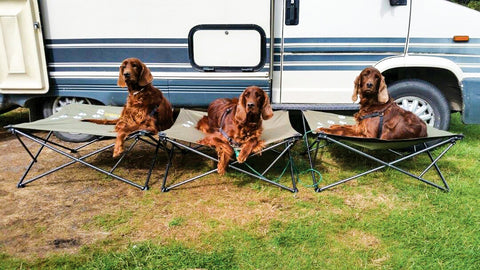 12 Things About Camping With Your Dogs That You Will Never Read In Any Book.