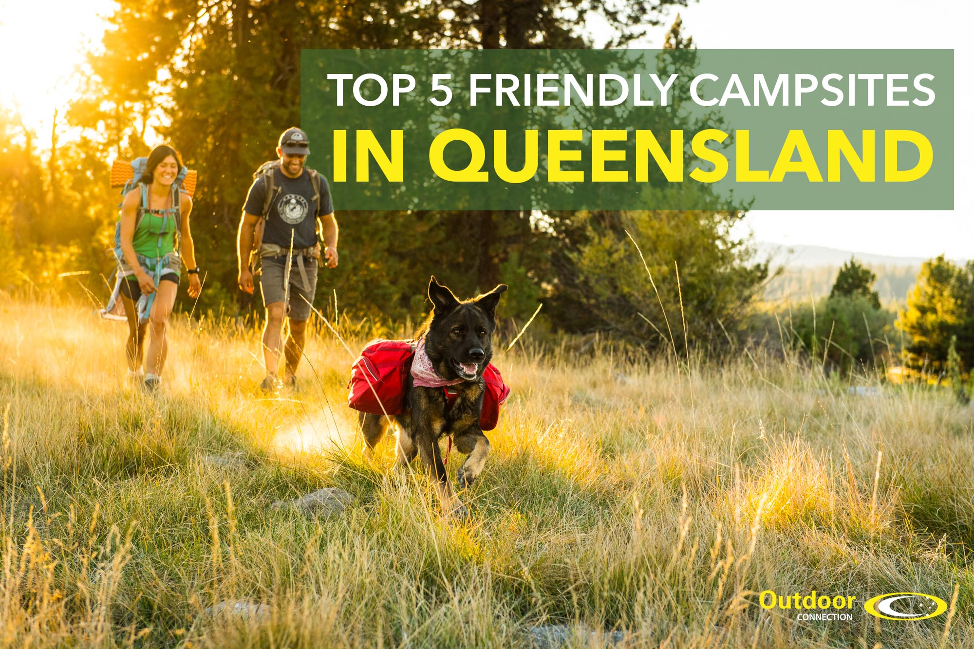 Top 5 Pet Friendly Campsites in Queensland