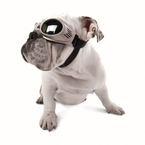 Doggles authentic eye protection for your dog. Research has shown that long hours in the sun without adequate eye protection increase the chances of developing eye disease. Doggles' UV-absorbant dog sunglasses can help protect your dog's eyes from sun damage.